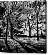 Super Contrasted Trees Acrylic Print