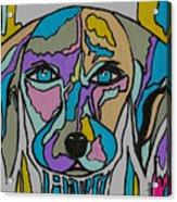 Super Hero - Contemporary Dog Art Acrylic Print