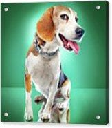 Super Pets Series 1 - Super Buckley Acrylic Print