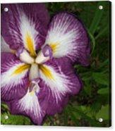 Super-sized Iris Acrylic Print