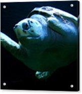 Super Turtle Acrylic Print