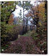 Superior Hiking Trail Acrylic Print