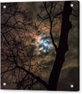 Supermoon W Tree 12-13-16 Acrylic Print
