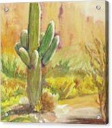 Superstition Saguaro Acrylic Print