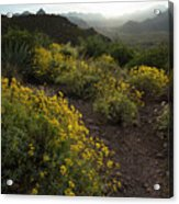Superstition Spring Acrylic Print