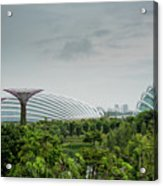 Supertrees At Gardens By The Bay Acrylic Print