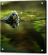Surface Tension Acrylic Print by Tim Nichols
