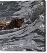 Surfer Dog 2 Acrylic Print