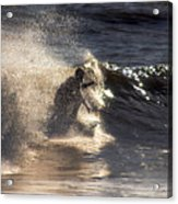 Surfs Up In Socal Acrylic Print