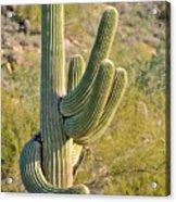 Surprise Cactus Acrylic Print