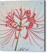 Surprise Lily Acrylic Print