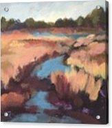 Surprise Wetland Acrylic Print