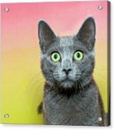 Surprised Cat Acrylic Print