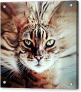 Surreal Cat Acrylic Print