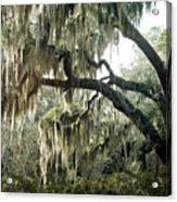 Surreal Gothic Savannah Georgia Trees With Hanging Spanish Moss Acrylic Print