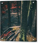 Surreal Red Leaves In A Dark Forest Finland Acrylic Print