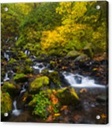 Surrounded By Fall Color Acrylic Print