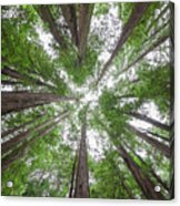 Surrounded By Giants Acrylic Print