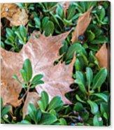 Surrounded Leaf Acrylic Print
