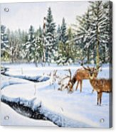 Surviving The Winters Acrylic Print
