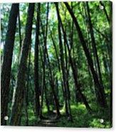 Susan Creek Indian Mound Trail Acrylic Print