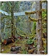 Suspended In The Rain Forest Acrylic Print