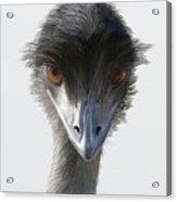 Suspicious Emu Stare Acrylic Print