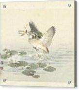 svogel, Kono Bairei, Aoki Kosaburo, Aoki Kosaburo, 1893 Acrylic Print