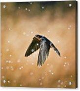Swallow In Rain Acrylic Print