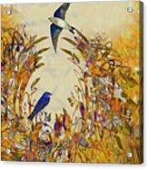 Swallow Tale Acrylic Print