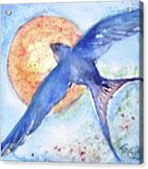 Swallows Return  Acrylic Print