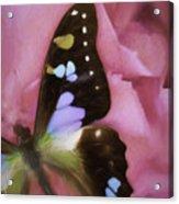 Swallowtail Dreams Acrylic Print