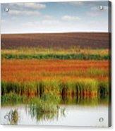 Swamp And Field Landscape Autumn Season Acrylic Print