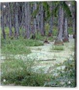 Swamp Garden At Magnolia Plantation And Gardens Acrylic Print
