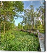 Swamp Garden Magnolia Plantation Acrylic Print