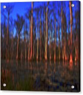 Swamp In Cypress Gardens Acrylic Print
