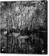 Swamp Island Acrylic Print