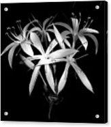 Swamp Lilies Acrylic Print