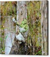 Swamp Monster Acrylic Print