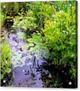 Swamp Plants Acrylic Print