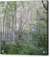 Photo Of Swamp Acrylic Print