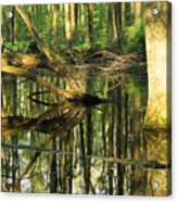 Swamps Are Beautiful Too Acrylic Print