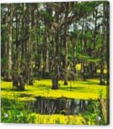 Swampy Beauty Acrylic Print