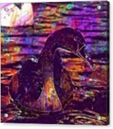 Swan Bird Animal Lake Summer  Acrylic Print
