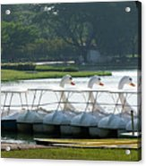 Swan Boat In A Lake Acrylic Print