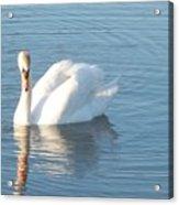Swan Cape May Acrylic Print