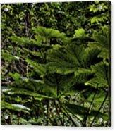 Swan Creek Foliage Acrylic Print