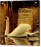 Swan Dance Acrylic Print