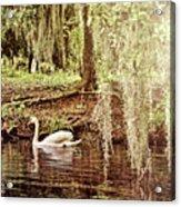 Swan Dreams Acrylic Print