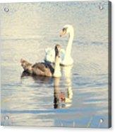 Swan G Acrylic Print